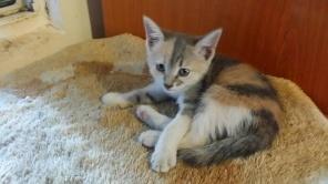 Kitten2_jul18