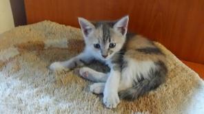 Kitten_jul18